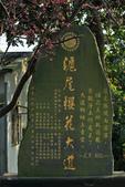 櫻。滬尾櫻花大道:IMG_14765.jpg