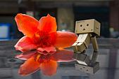 花。木棉:IMG_4914.jpg