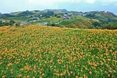 六十石山の金針花季。:IMG_10579.jpg