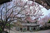 櫻。東方寺:IMG_12976.jpg