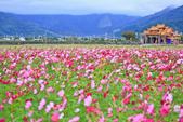 花東縱谷。油菜花:IMG_12471-37.jpg