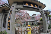 櫻。東方寺:IMG_12979.jpg