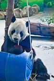 遊。木柵動物園:IMG_0049.jpg