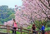 櫻。三生步道:IMG_8384.jpg