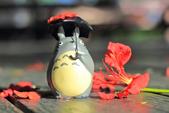 鳳凰花開。:IMG_9044.jpg