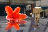 花。木棉:IMG_4916.jpg