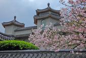 櫻。東方寺:IMG_12985.jpg