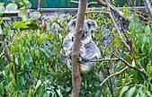 遊。木柵動物園:IMG_0004.jpg