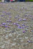 紫藤の恋。:IMG_3326.jpg