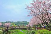 櫻。三生步道:IMG_8390.jpg
