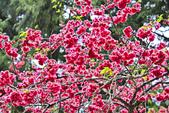 九族。櫻花季:IMG_4653.jpg