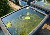 植物園。:IMG_4237.jpg