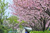 櫻。三生步道:IMG_8402.jpg
