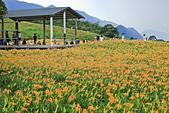 六十石山の金針花季。:IMG_10502.jpg