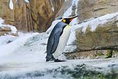 遊。木柵動物園:IMG_0179.jpg