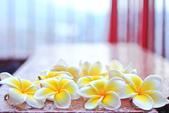 雞蛋花。:IMG_9477.jpg