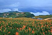 六十石山の金針花季。:IMG_10526.jpg