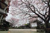 櫻。東方寺:IMG_8457.jpg