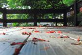 鳳凰花開。:IMG_9043.jpg