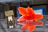 花。木棉:IMG_4917.jpg