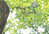 五色鳥。:IMG_10205.jpg