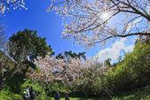 櫻。陽明山花季:IMG_0311.jpg