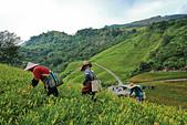 六十石山の金針花季。:IMG_10489.jpg