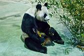 遊。木柵動物園:IMG_0052.jpg
