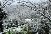 雪。陽明山:IMG_7233.jpg