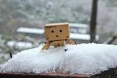 雪。陽明山:IMG_7206.jpg