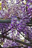 紫藤の恋。:IMG_3351.jpg