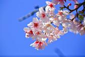 櫻。橘咖啡:IMG_12912.jpg