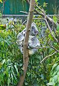 遊。木柵動物園:IMG_0005.jpg