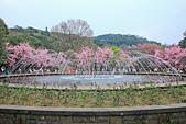 昭和櫻。:IMG_7839.jpg
