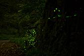 夜。螢火蟲:IMG_9693.jpg