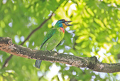 五色鳥。:IMG_10194.jpg