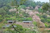 櫻。陽明山:IMG_8754.jpg