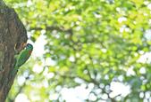 五色鳥。:IMG_10202.jpg