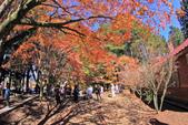 秋。福壽山:IMG_12033.jpg