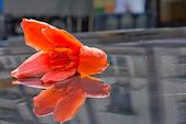 花。木棉:IMG_4921.jpg