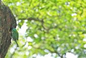 五色鳥。:IMG_10207.jpg
