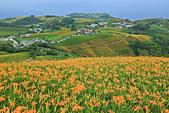 六十石山の金針花季。:IMG_10519.jpg