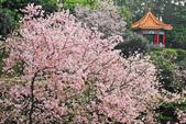 櫻。天元宮:IMG_12935.jpg
