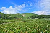 竹子湖。繡球花:IMG_13665.jpg
