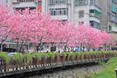 櫻。希望之河:IMG_8343.jpg