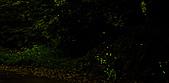 夜。螢火蟲:stackedImage2.jpg