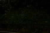夜。螢火蟲:IMG_9686.jpg