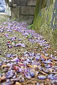 紫藤の恋。:IMG_3329.jpg