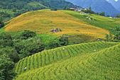 六十石山の金針花季。:IMG_10507.jpg