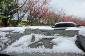 雪。陽明山:IMG_7174.jpg